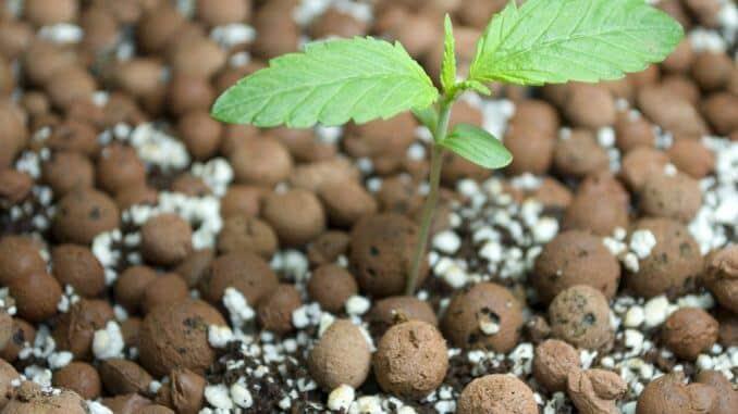 Uzgoj marihuane nikad jednostavniji! Posjeti Vutropedija.com!
