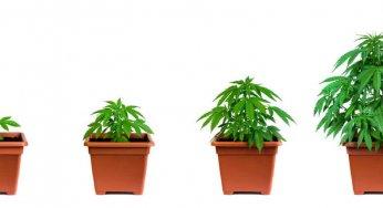 web stranice za pronalazak medicinske marihuane rekao je da se želi spojiti sa mnom