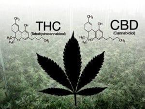 Kemijska struktura CBD-a i THC-a.