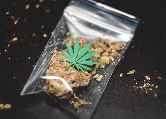 CBD konoplja je odlična za vaping ili pušenje