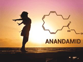 anandamid