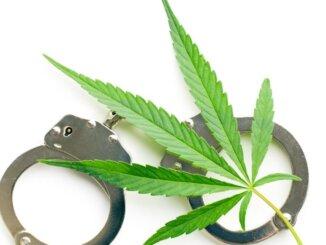 Legalizacija marihuane u SAD daje primjer Hrvatskoj