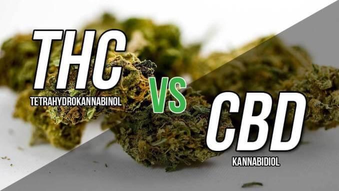 Koja je razlika između THC i CBD spojeva?