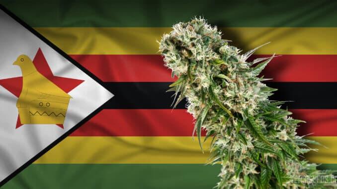 Legalizacija kanabisa u Zimbabveu je na pragu
