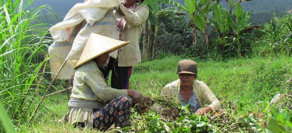Tajland se sprema za potpunu legalizaciju kanabisa