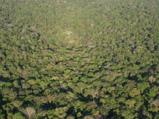 Amazona trenutno pati od ogromne deforestacije i požara.
