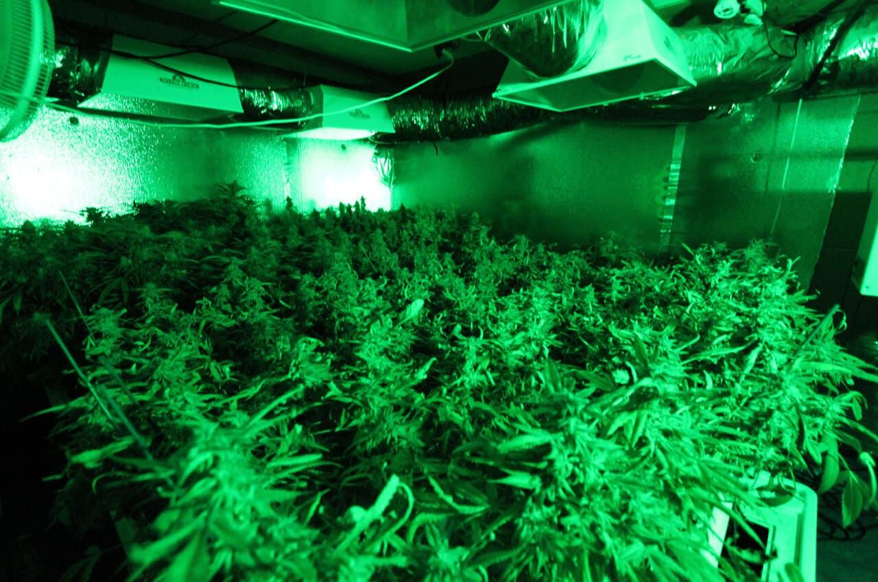 Osnivanje istraživačkog instituta za medicinski kanabis je jedan od ciljeva Cannabis Denmarka.