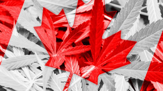 Kanadski kanabis