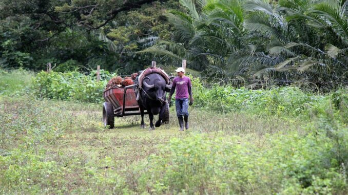 Uvjeti tla u Kolumbiji mogli bi predstavljati grozan izazov za zemljine proizvođače.