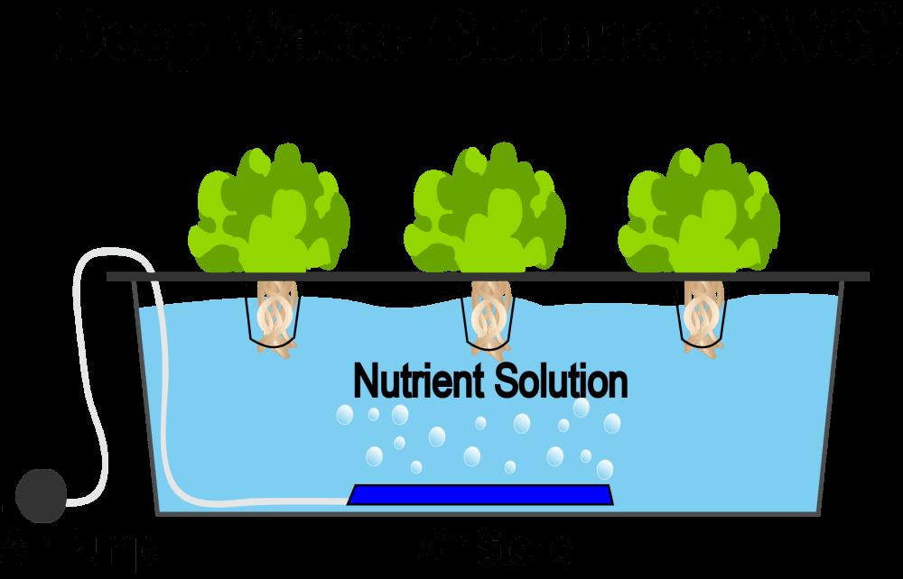 Deep water culture je tehnika gdje hidroponski uzgoj koristimo tako da potpuno uronimo korijen