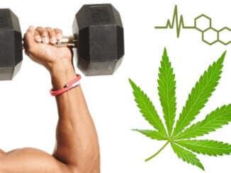 CBD je močno oružje za oporavak mišića poslije treninga