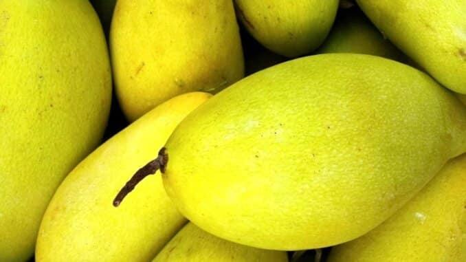 Mango se koristi uz kanabis u svrhu povećanja potencije marihuane