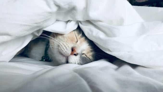 CBD ulje za mačke je danas popularno riješenje za liječenje životinja