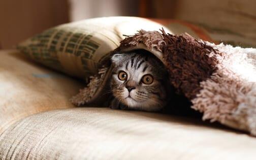 Doziranje CBD ulja kod mački treba biti postupno do optimalne doze