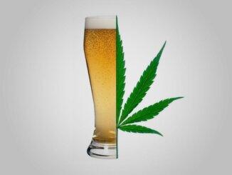Marihuana i alkohol: vječita borba