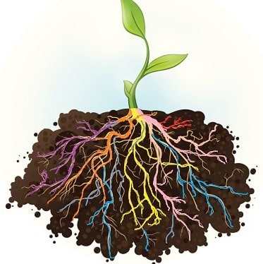 Mikroorganizmi žive u suživotu s korijenom kanabisa