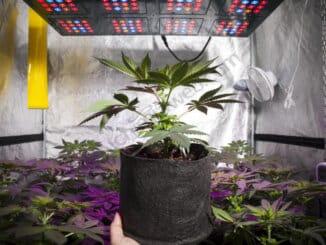 Growbox se pokazao kao odlično rješenje za unutarnji uzgoj konoplje