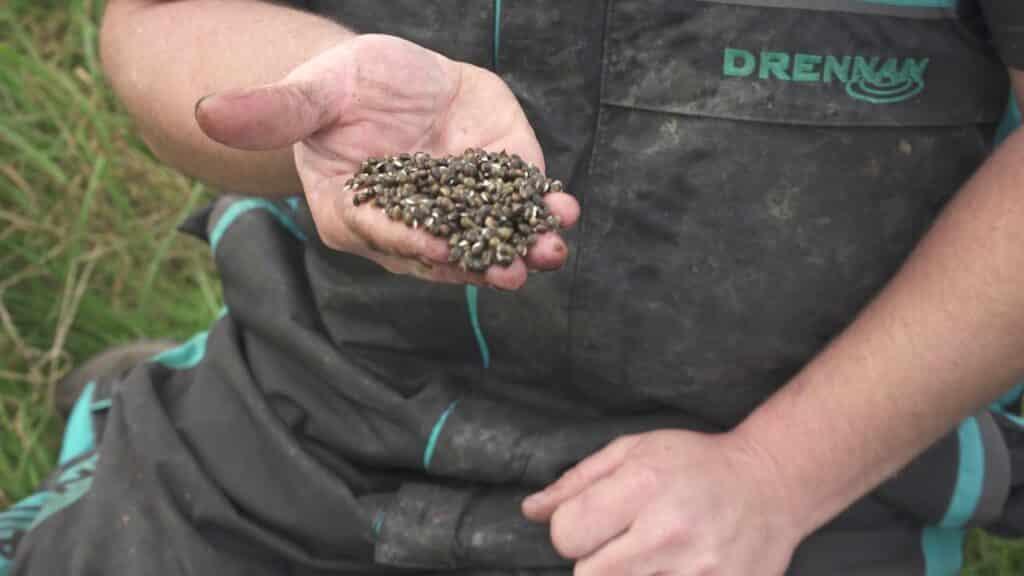 Sjemenke konoplje se mogu koristiti kao mamac za ribe i za hranidbu riba