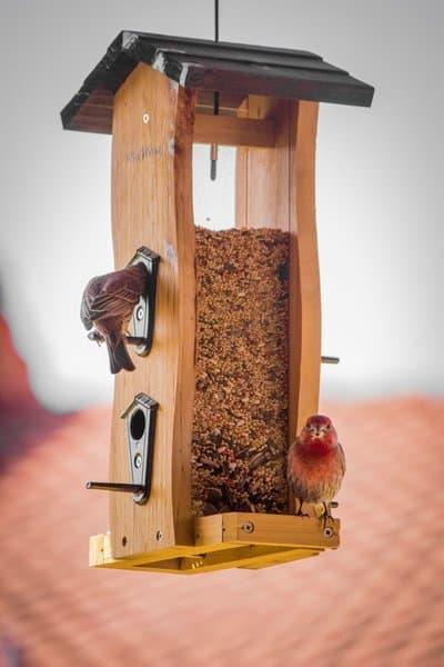 sjemenke konoplje su najbolja opcija kada je hranjenje ptica u pitanju.