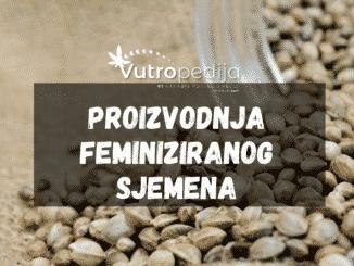 Koloidno srebro je naučestalija metoda proizvodnje feminiziranog sjemena