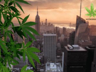Potpuna legalizacija kanabisa u New Yorku