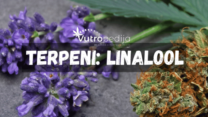 Terpen Linalool